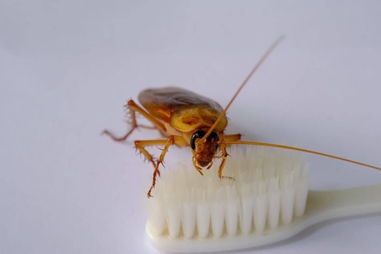 Откуда появляются тараканы в квартире и как от них избавиться