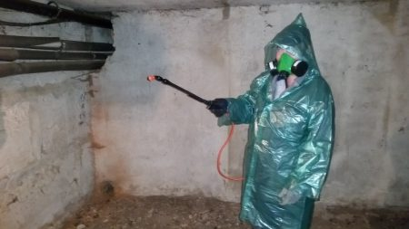 Дезинфекция курятника в домашних условиях: чем и как - сельская жизнь
