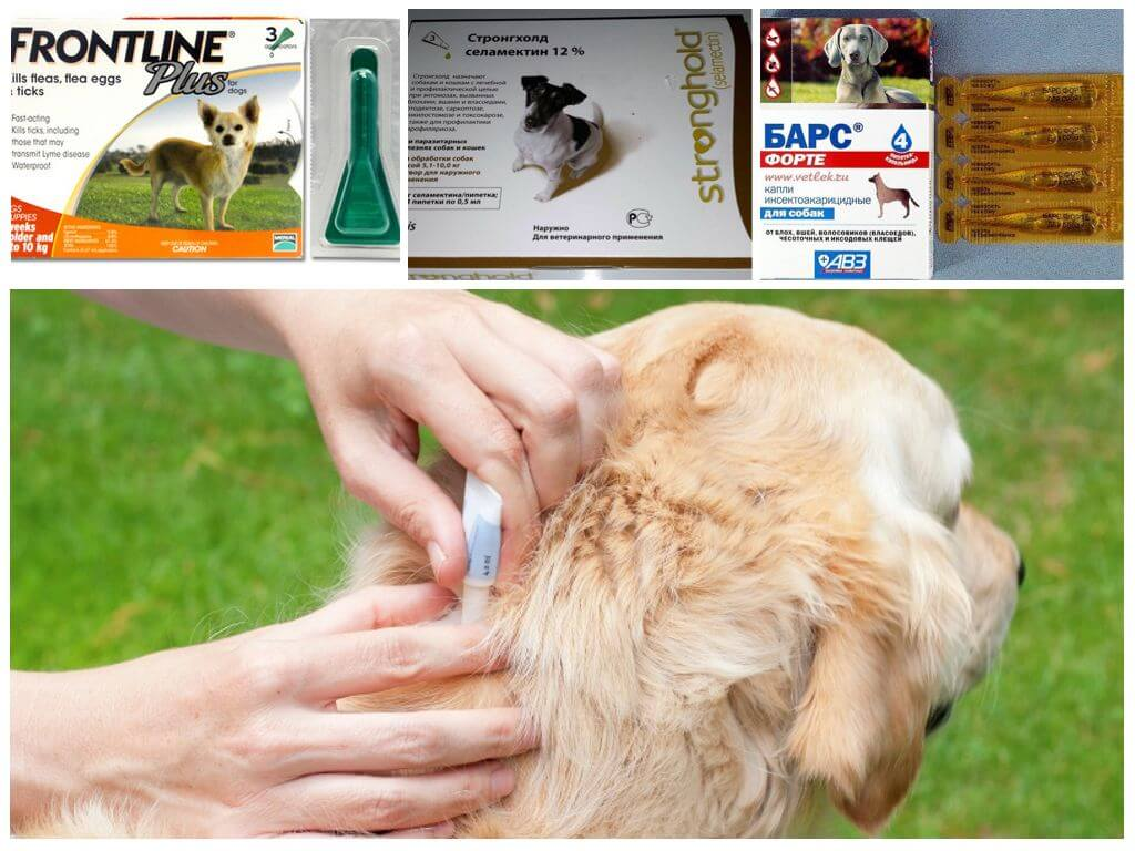 Средство от блох для собак: спрей, капли, таблетки, народные препараты.