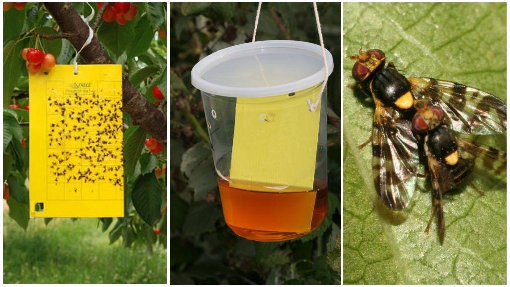 Как избавиться от мух на участке: виды, обзор лучших способов борьбы при помощи подручных средств и химических препаратов, их плюсы и минусы