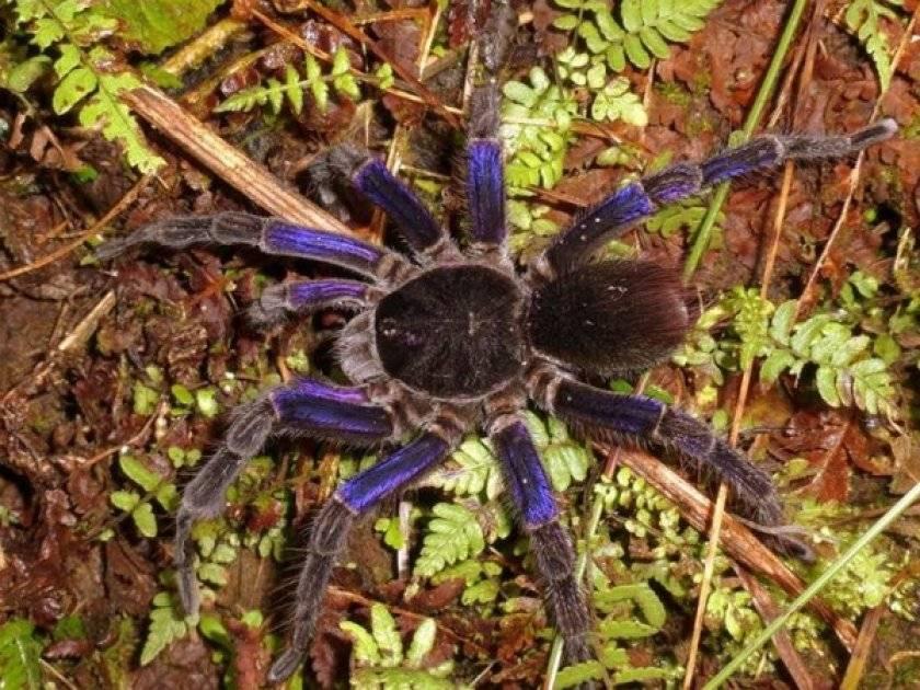 Чем питается паук птицеед на самом деле?