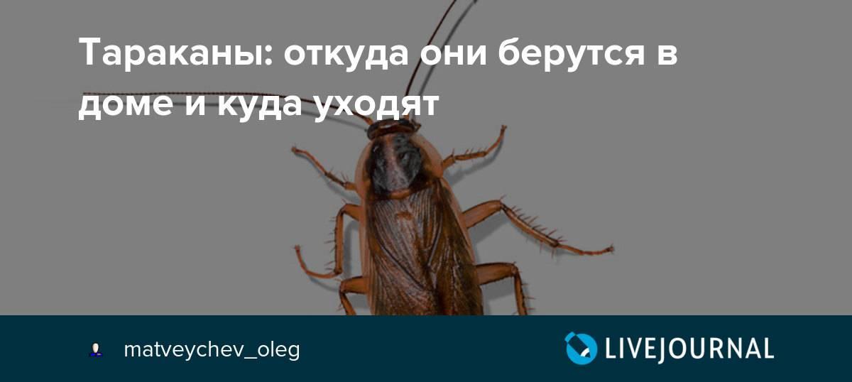 Куда ушли тараканы и почему они это сделали?