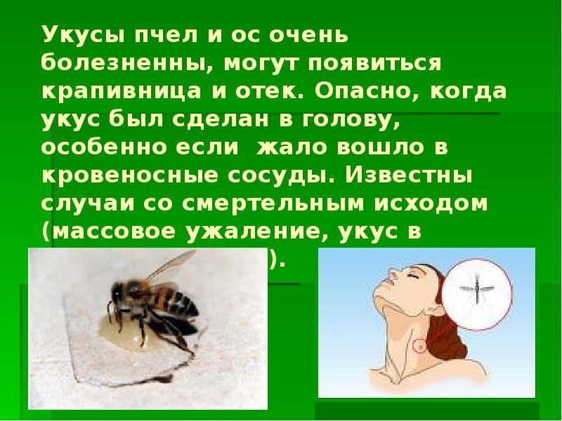 Укус пчелы что делать в домашних условиях: первая помощь, чем лечить пчелиный укус, последствия