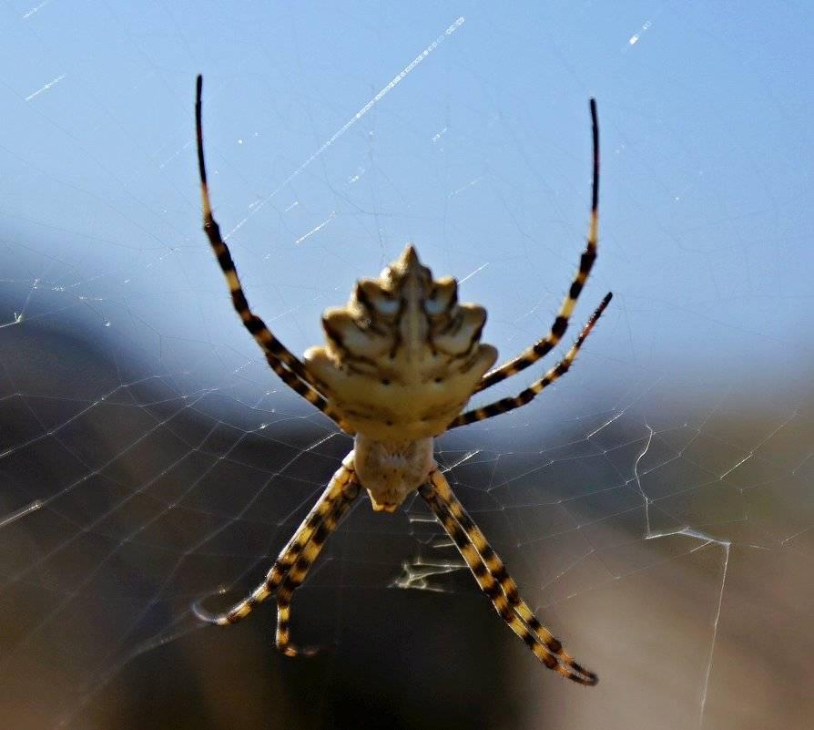 7 смертельно опасных животных и насекомых, обитающих на популярных курортах – статьи – арриво