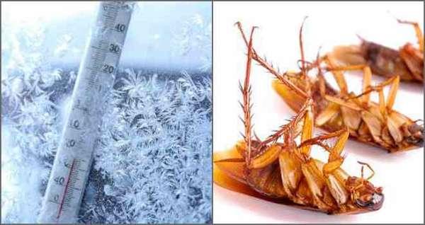 Как вывести тараканов из микроволновой печи?