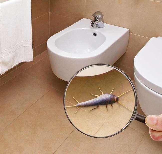 Как избавиться от чешуйницы в домашних условиях?