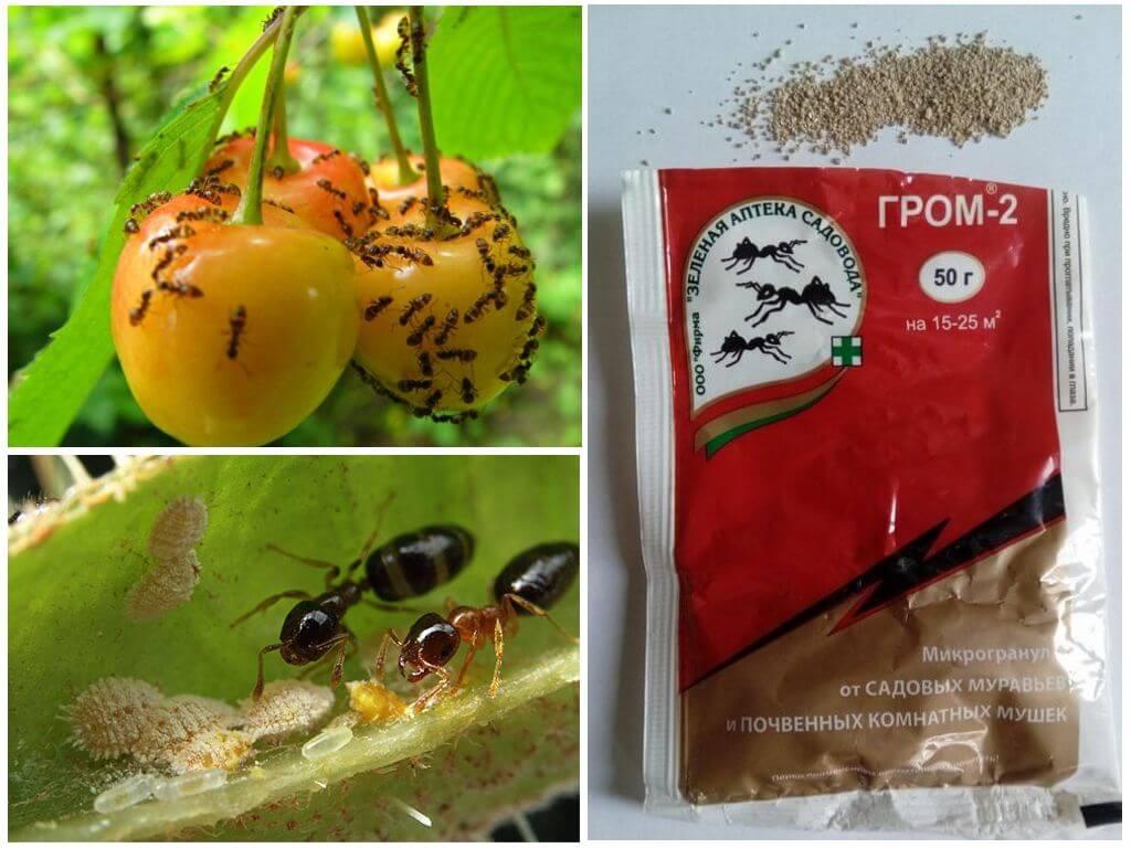 Инсектицид зас гром-2 от почвенных мушек и муравьев 10г (шт)