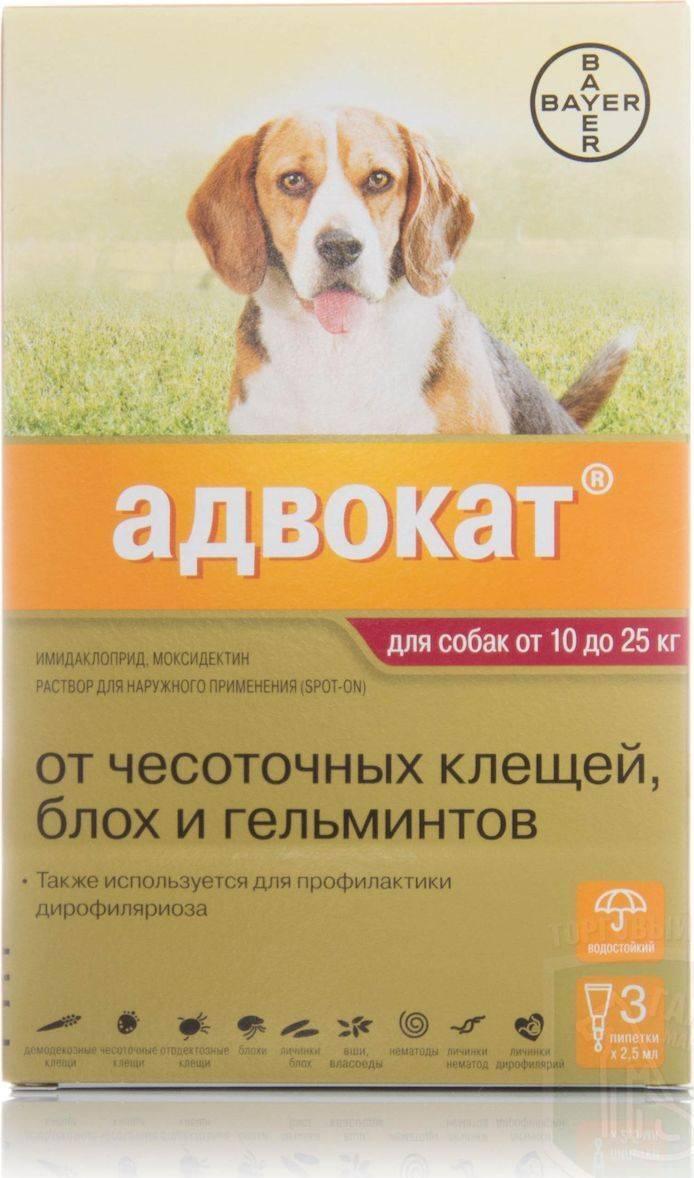 Адвокат ветеринарный препарат. капли адвокат для собак: инструкция по применению