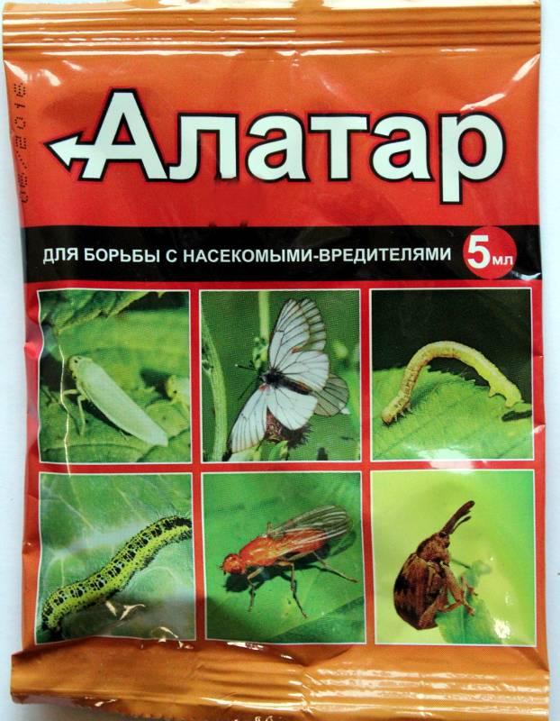 «регент» от тараканов: отзывы, инструкция по применению и эффективность