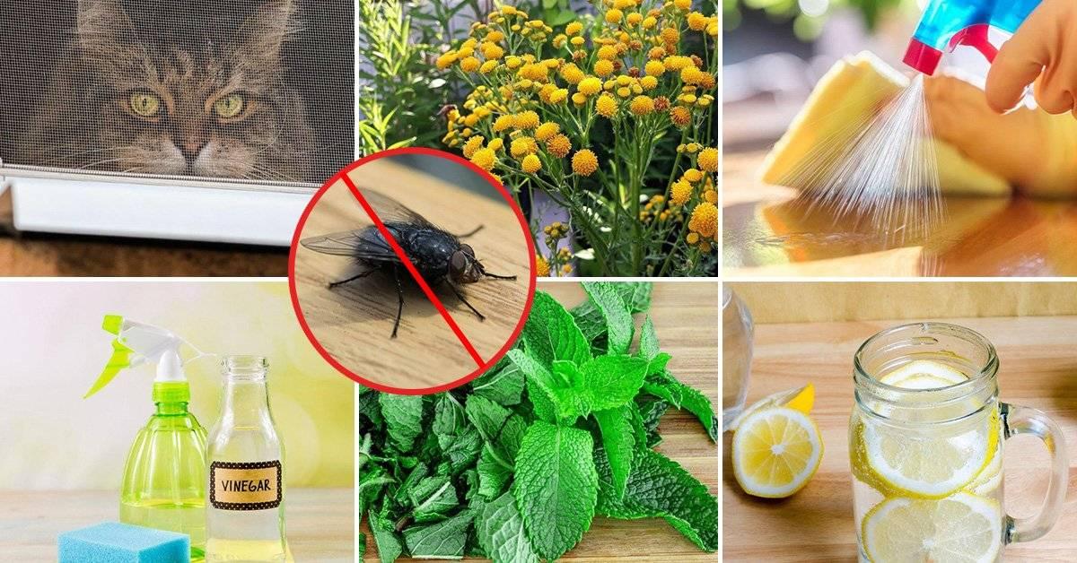 Средства для борьбы с мухами в частном доме и на улице - советы по выбору