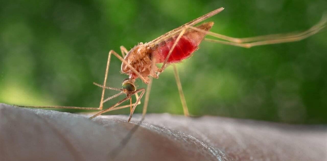 Ученые объяснили нашествие комаров в российских регионах