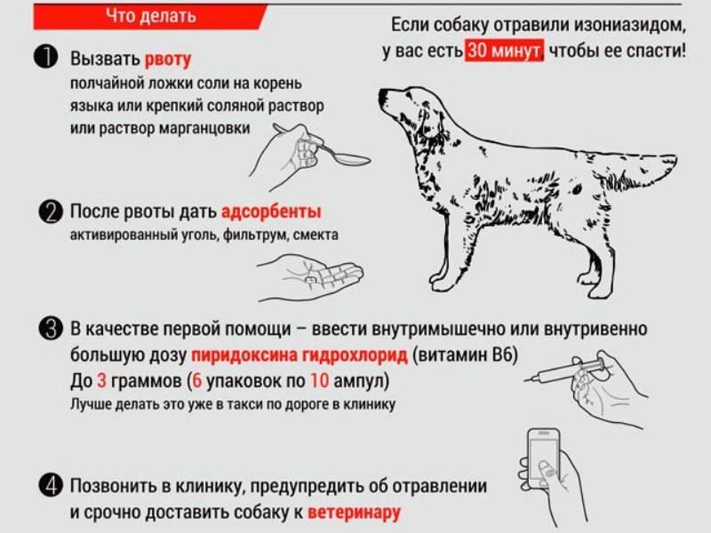 Что делать если собака съела крысиный яд?