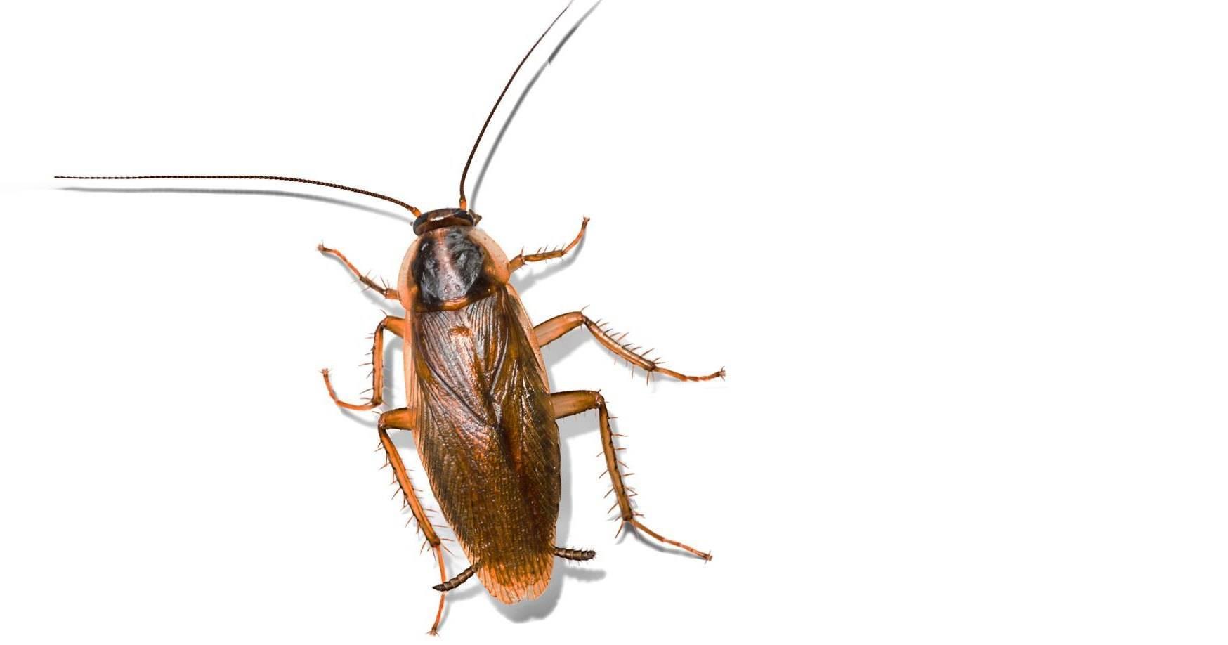 К чему снится тараканы. видеть во сне тараканы - сонник дома солнца