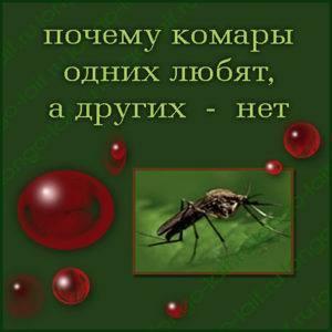 Сколько раз может укусить один комар. сколько живет комар: в квартире, после укуса и без крови человека?