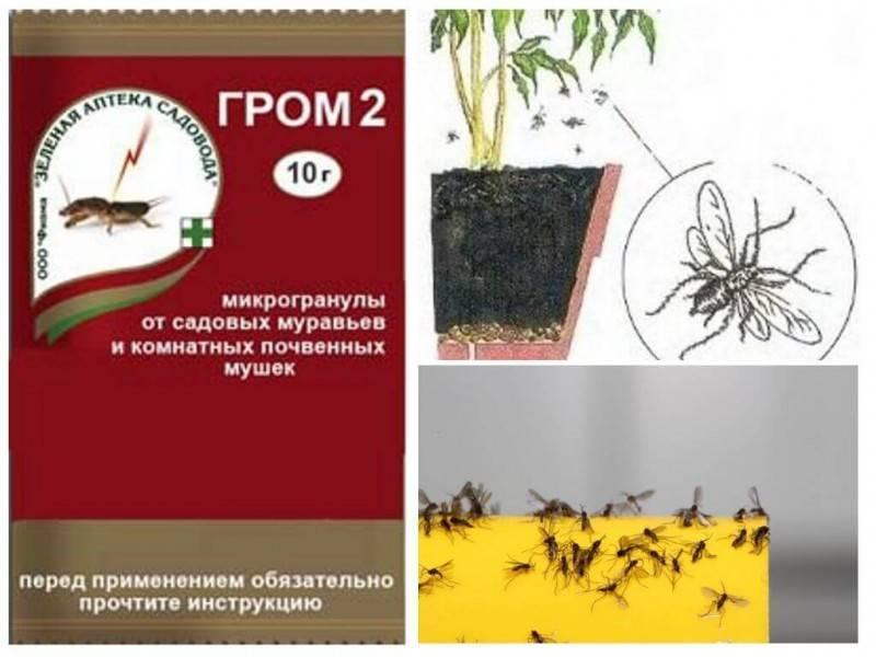 Инсектицидные средства от муравьев - рейтинг 22-х лучших
