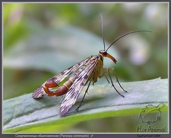 Класс насекомые. общая характеристика, строение, размножение, разнообразие и значение насекомых   биология