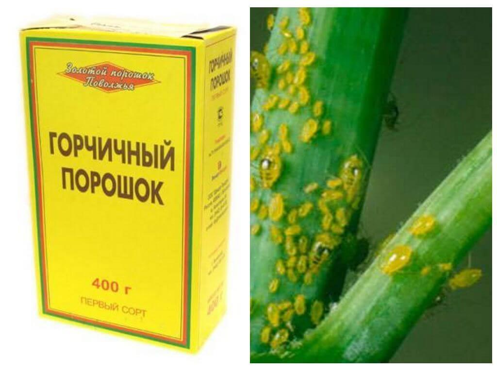 Горчица в огороде: эффективное применение от вредителей