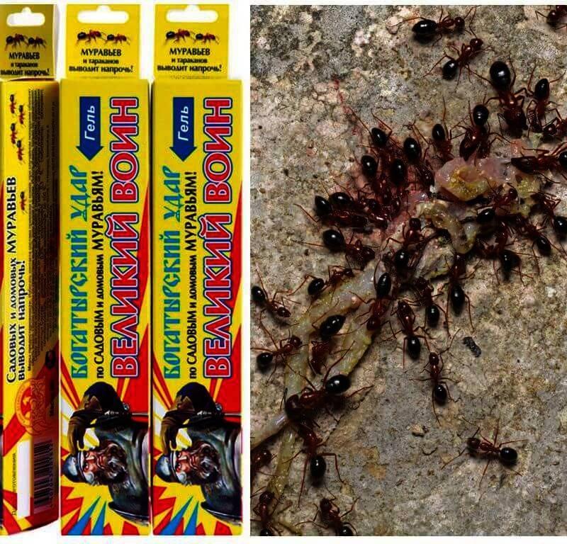 Народные и современные способы избавления от муравьев в доме