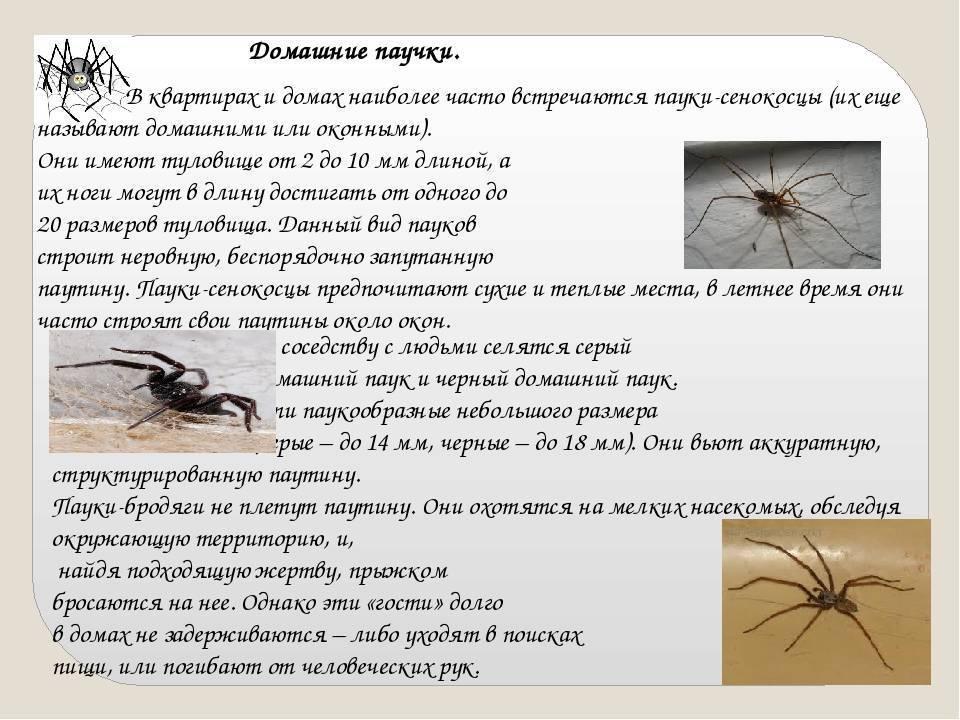 Что делать, если в доме развелись пауки