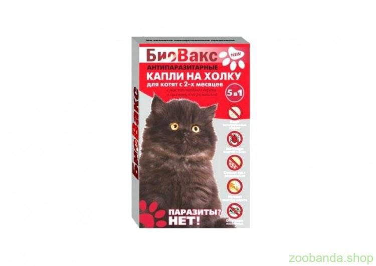 Выбираем правильный пробиотик для кошек, список и рейтинг на 2021 год