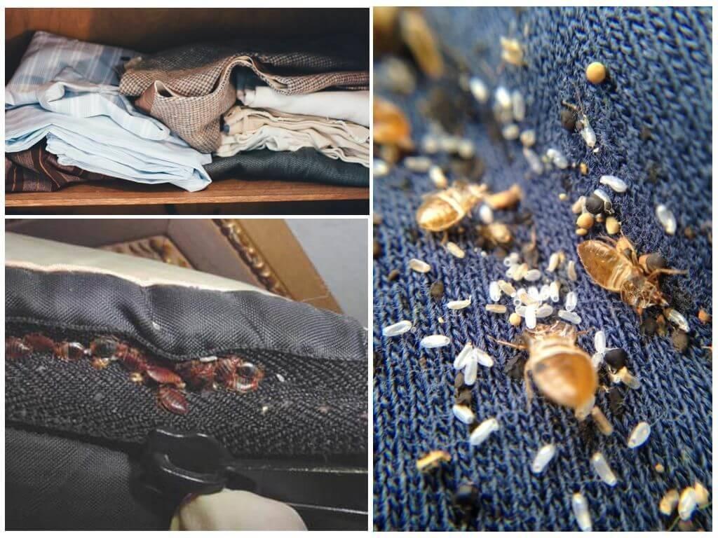 Где живут клопы: как обнаружить насекомых в квартире, могут ли они жить в одежде и диване