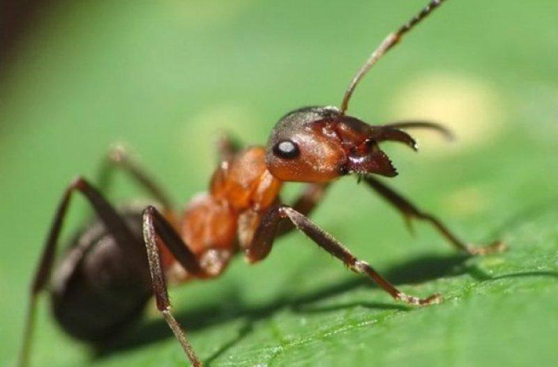 Сонник муравьи бегают по мне. к чему снится муравьи бегают по мне видеть во сне - сонник дома солнца