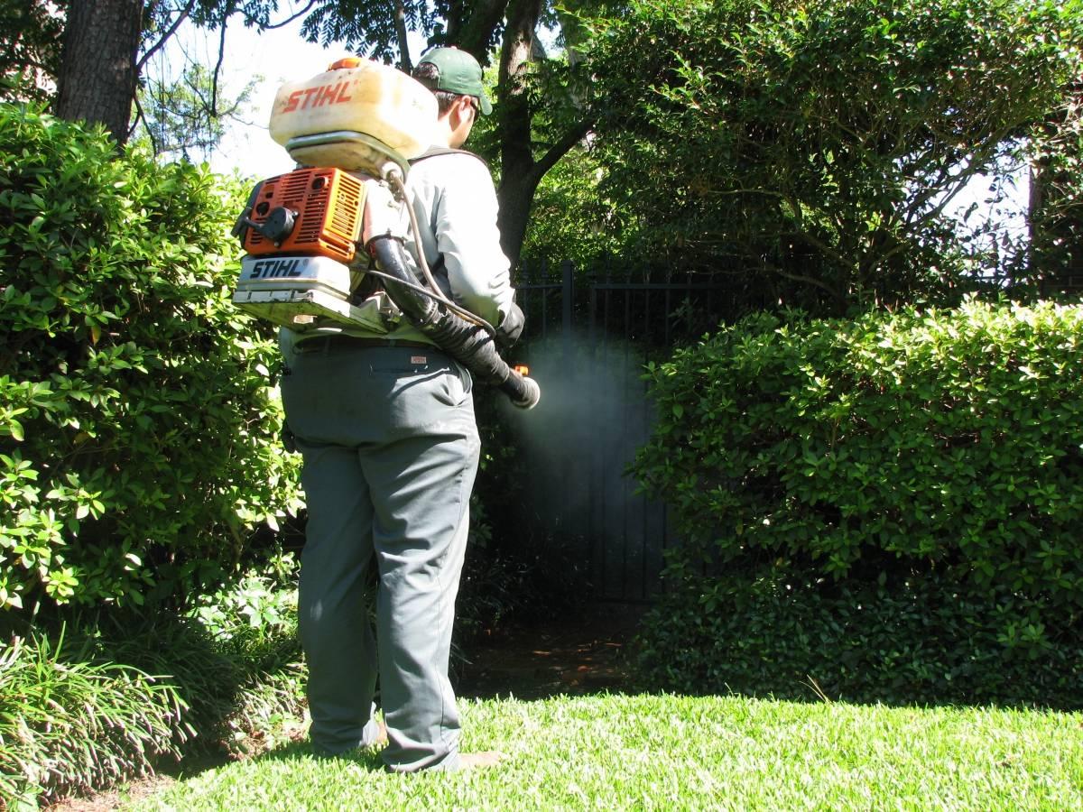 Чем обработать участок от комаров самостоятельно