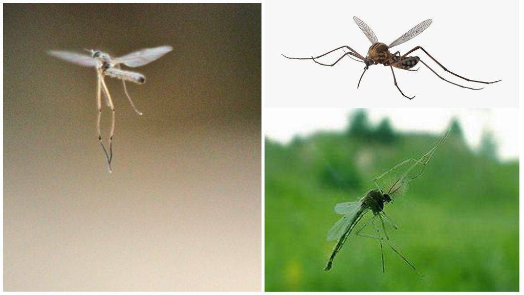 Высота и скорость полета мухи: исследования биологов