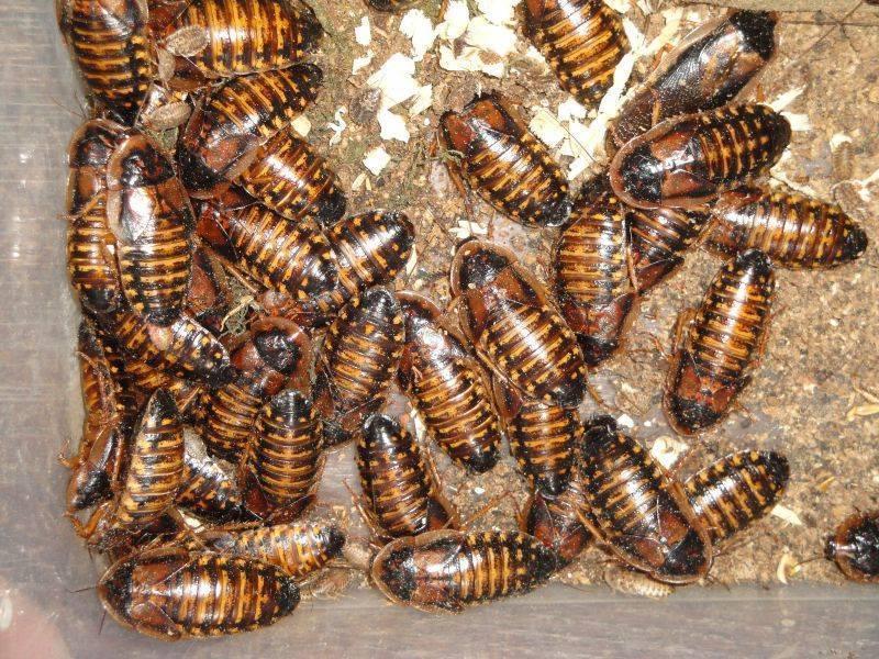 Гель раптор от тараканов и муравьёв: описание, инструкция по применению и отзывы