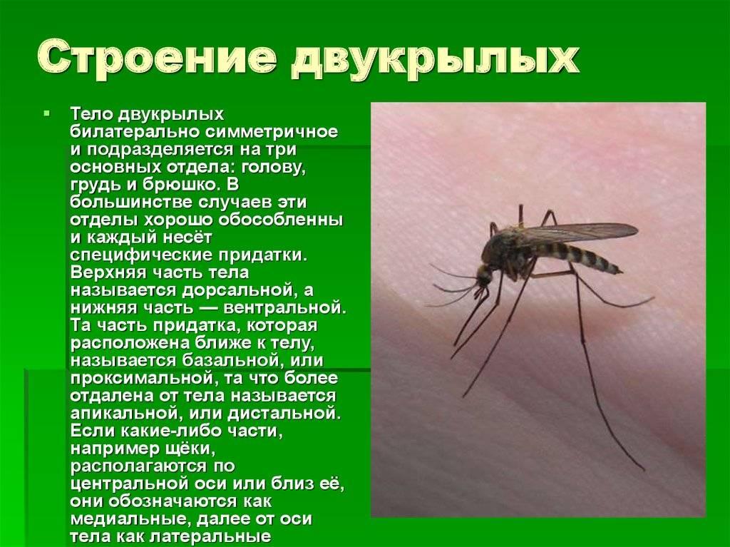 Стрекоза плоская | мир животных и растений