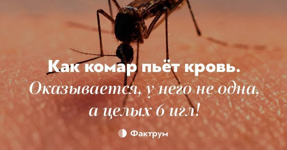 Почему комары пьют кровь и зачем она им нужна? - ❶ интересные факты ❶