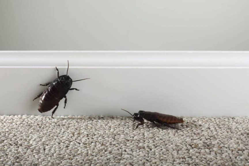 Откуда появляются тараканы в квартире и в частном доме и как бороться сними?