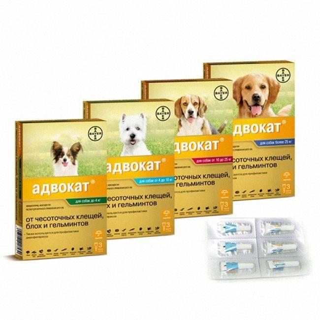 Капли адвокат против клещей и блох для собак: инструкция по применению