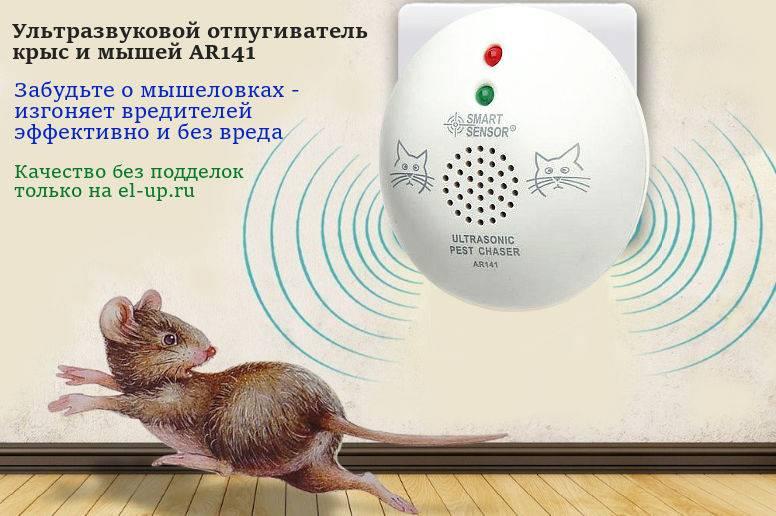 Как избавиться от мышей в квартире: чего они боятся, чем травить