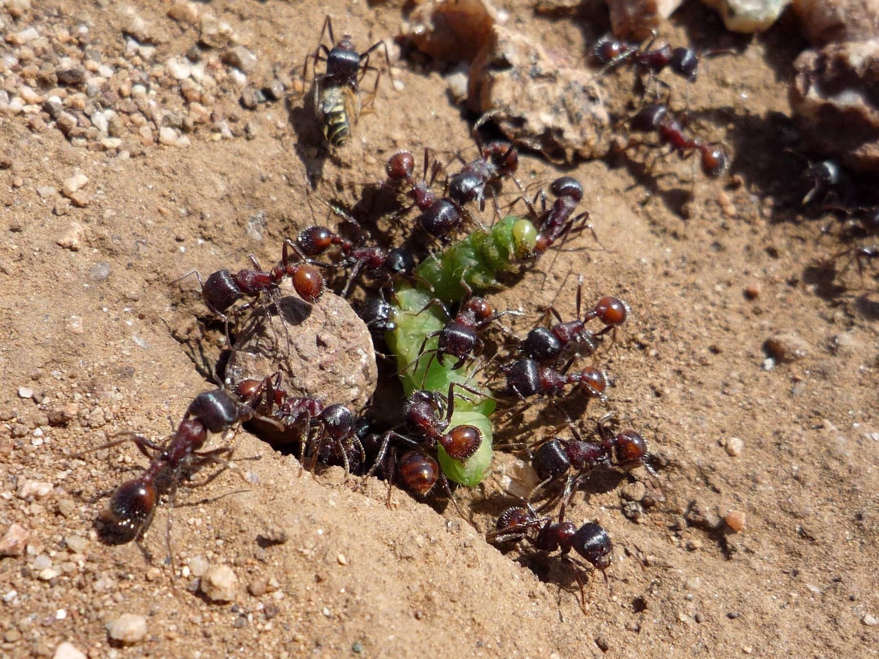 Как быстро вывести муравьев из теплицы: физические методы, химические средства и народные способы