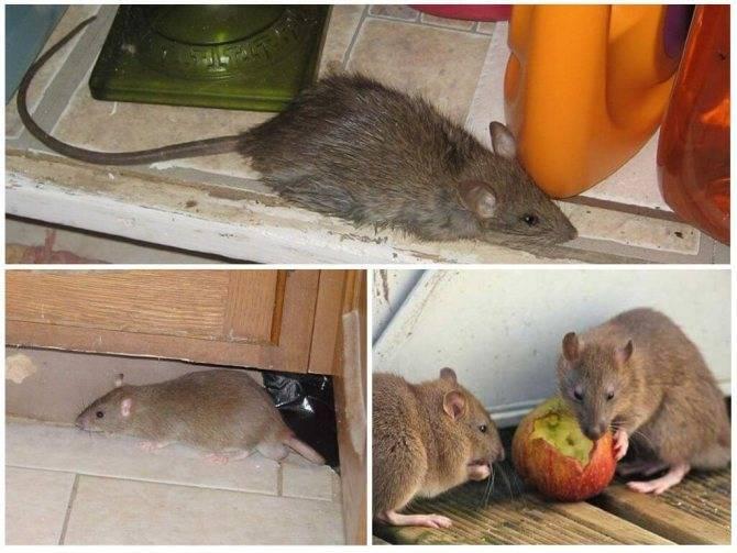 Что делать если в машине завелась мышь - сэс
