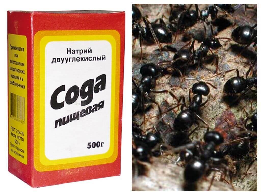Уксус от муравьев в огороде: 4 способа применения - etocvetochki.com