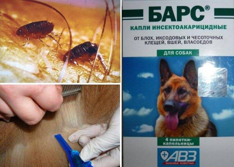 Прививка от клещей для собак: как и когда ее делают – отзывы ветеринаров