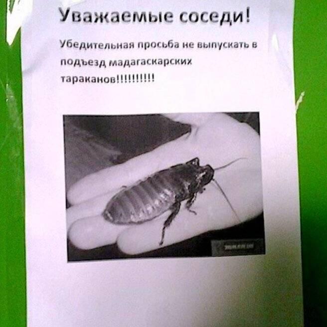 Что делать, если от соседей ползут тараканы, куда жаловаться, как бороться