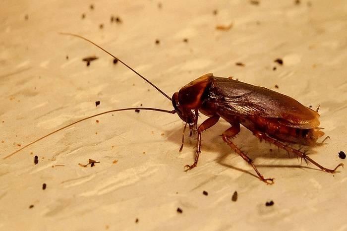 Куда делись тараканы: почему исчезли из больших городов и куда ушли?