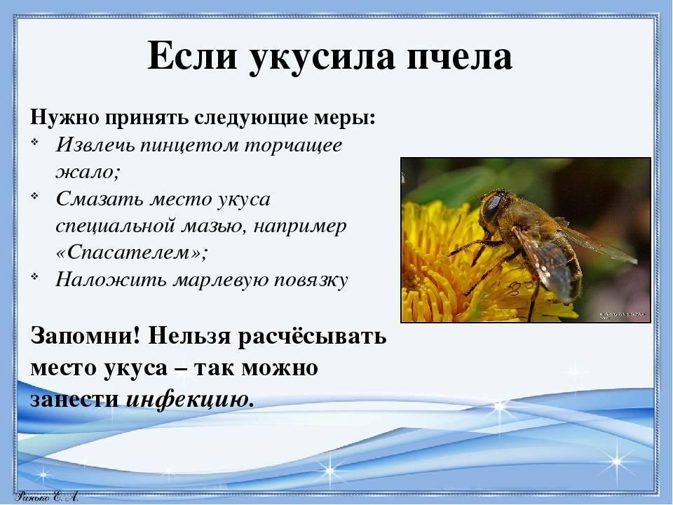 Первая помощь при укусе осы: что помогает снять отек