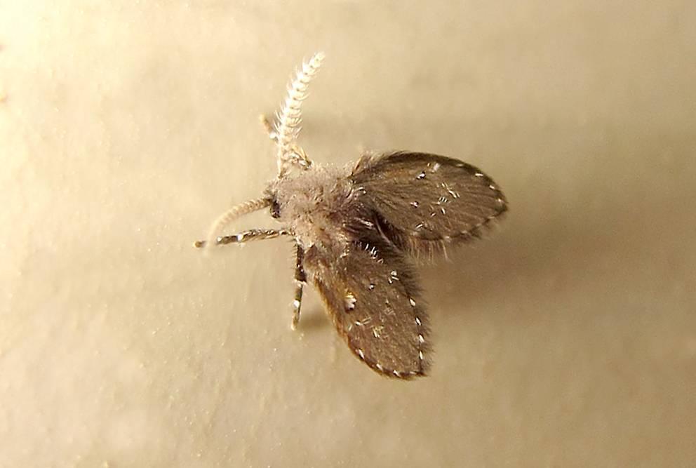 Как избавиться от моли в доме: подборка народных и современных способов борьбы с бабочками и личинками