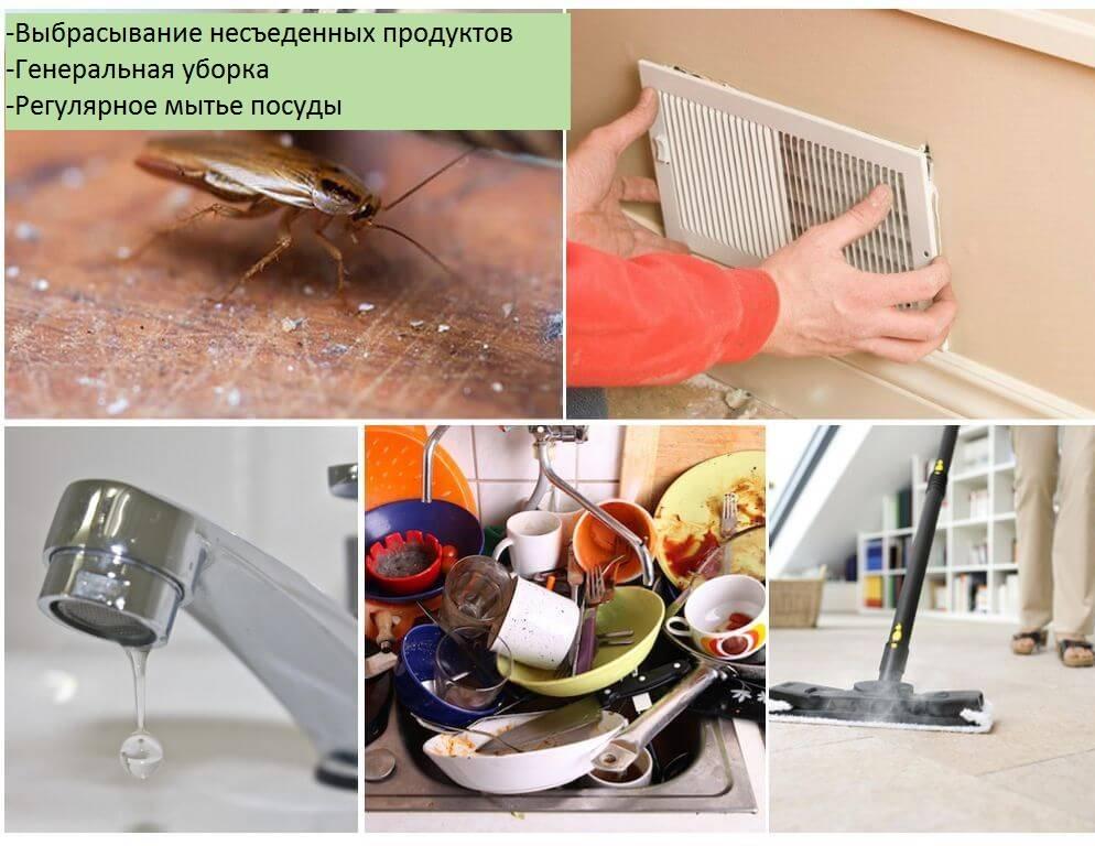 Как избавиться от тараканов на кухне проверенный способ