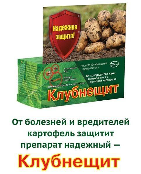 Чем лучше всего перед посадкой обработать картофель от колорадского жука: табу, конфидор и древесная зола