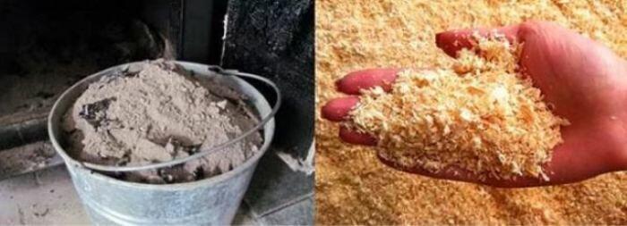 Туалетная муха: способы борьбы с ней