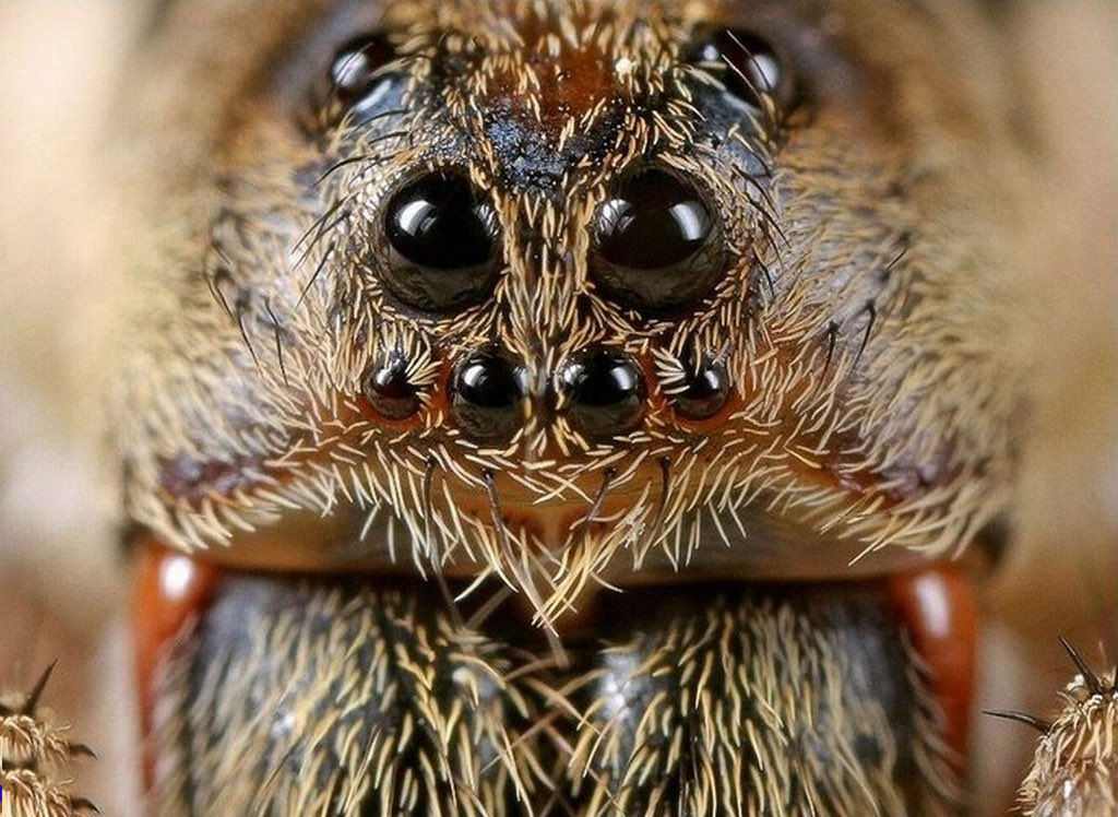 С чем может быть связана боязнь тараканов и как с ней бороться?