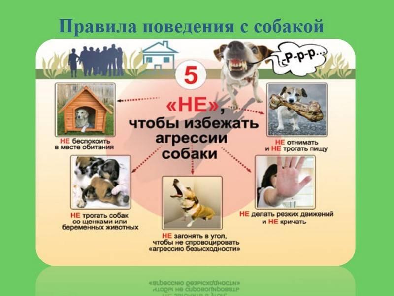 Как вести себя в лесу, чтобы избежать укуса клеща, способы защиты
