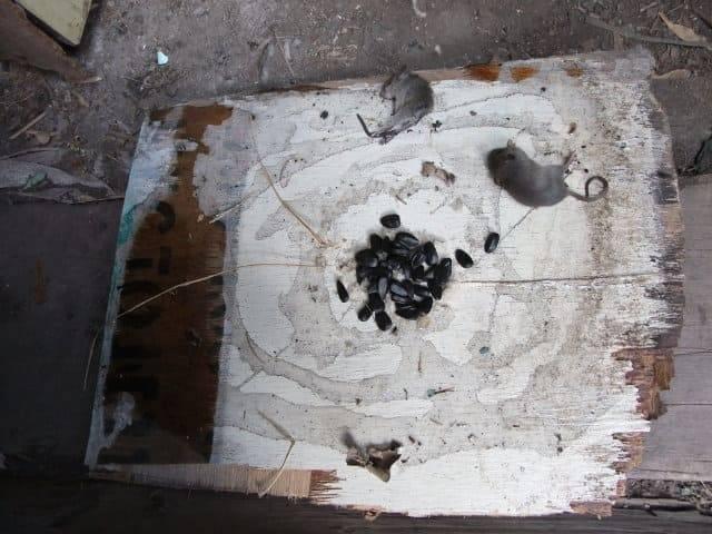 Чем отмыть клей для мышей: от кошки, с пола или одежды