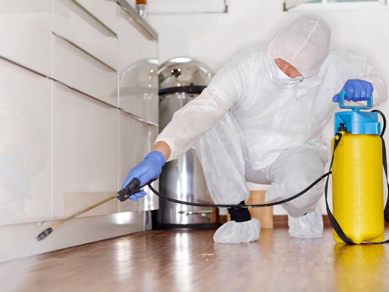 Уничтожение тараканов: дезинфекция и дезинсекция службами, чем травят