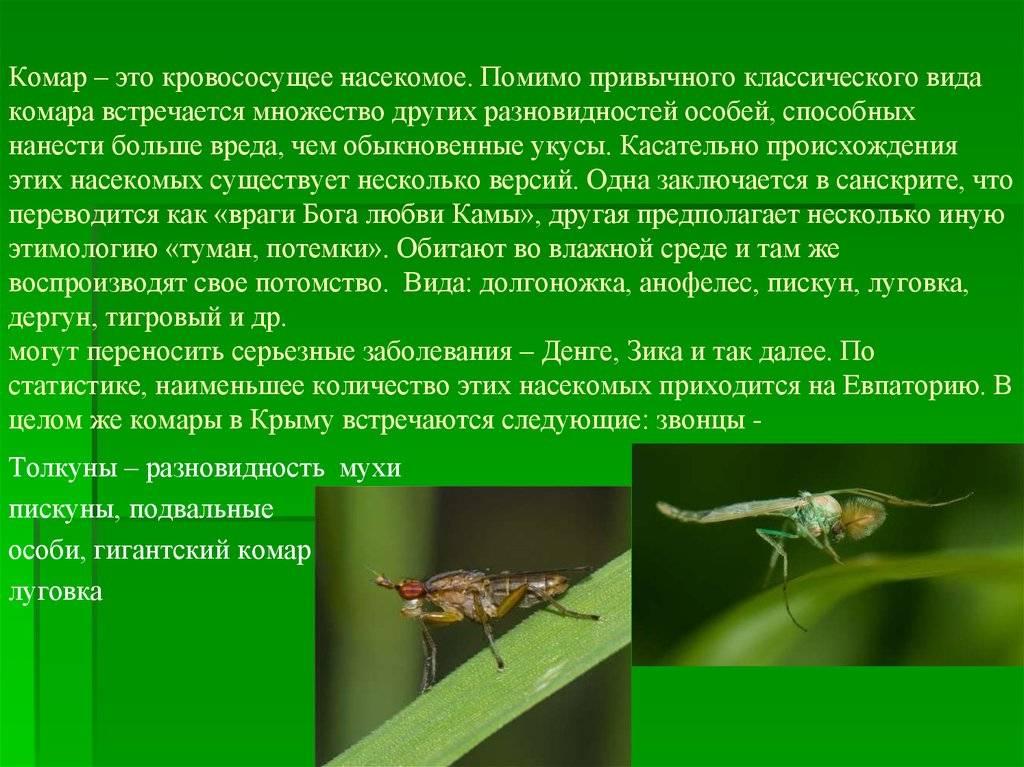 Что нужно знать о комарах